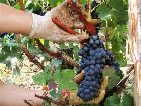An Introduction to Wine: Wine Styles - Part Two