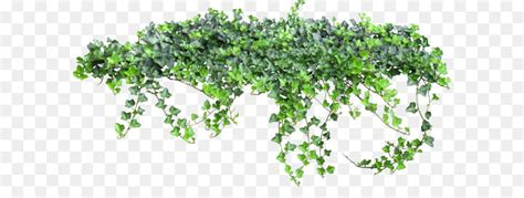 Texture Vine - Ivy fairy tale 1679*827 transprent Png Free