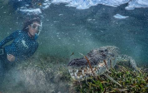 Swimming with wild Saltwater Crocodiles in Mexico